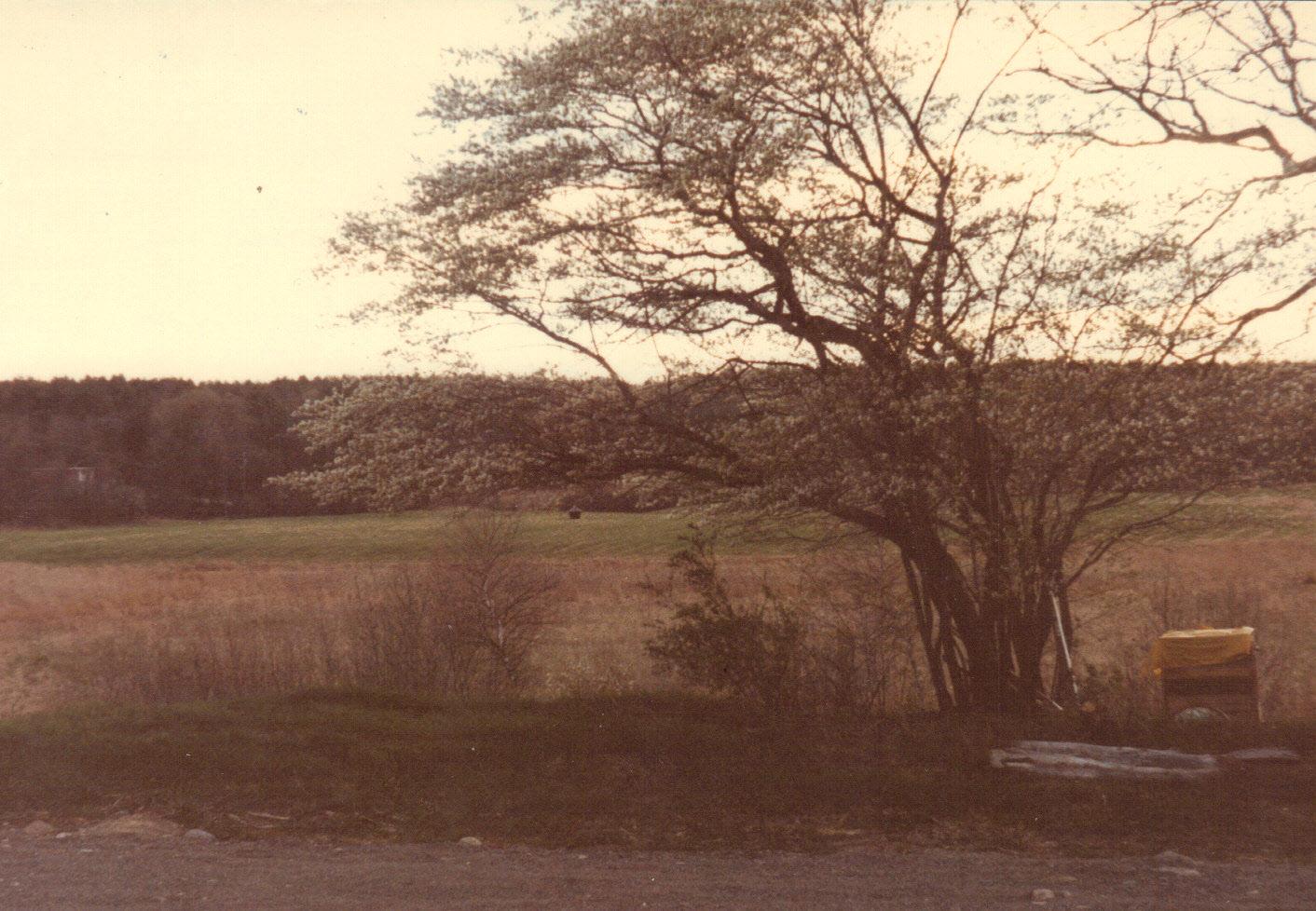 1980 wetland